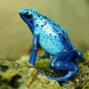 frog, exotic, close up